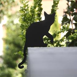 Katze Garten Dusia