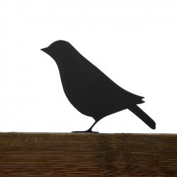 Bird Dreptak