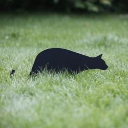 Kot Bonifacy wbity w trawę
