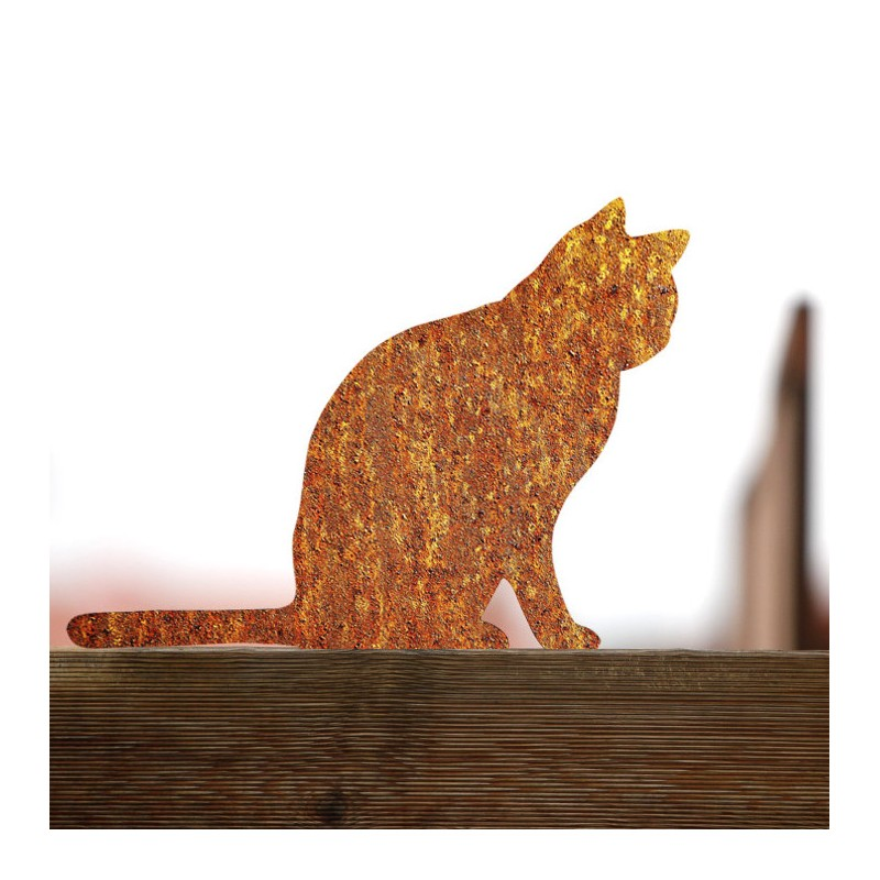 Rusty cat Anatol