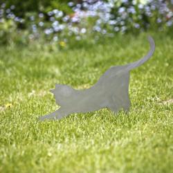 Rdzewiejący Kot Mizia w trawie