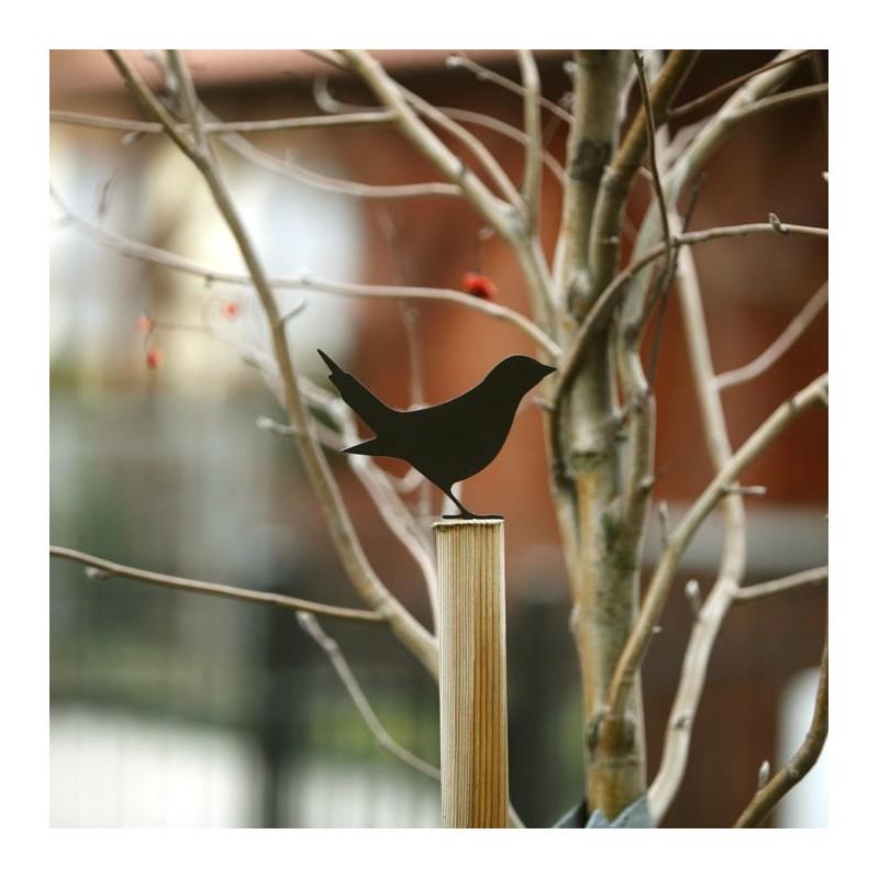 Ptak Ćwirek na płot